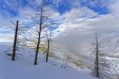 Döda träd, snö och dunster på Mammoth Hot Springs royaltyfri fotografi