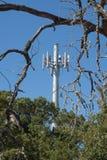 Döda trädfilialer bor träd och ett celltorn Fotografering för Bildbyråer