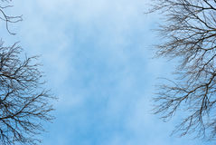 Döda trädfilialer mot blå himmel Arkivbilder