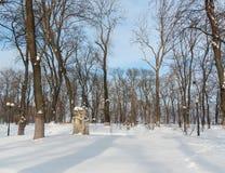 Döda trädfilialer mot blå himmel Fotografering för Bildbyråer