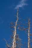 döda trees Royaltyfri Fotografi