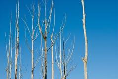 döda trees Royaltyfri Bild