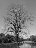 Döda Trees Arkivfoto