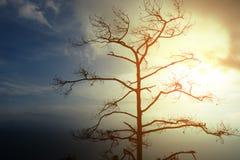 Döda Trees Arkivfoton