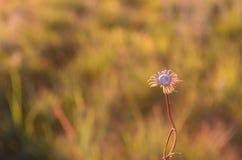 Döda växter fotografering för bildbyråer