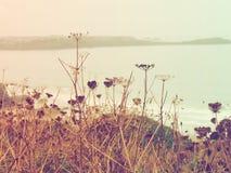 Döda växter på havet Royaltyfria Bilder