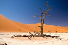 Döda Vlei av Namibia Royaltyfri Foto