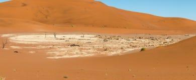 Döda Vlei av Namibia Royaltyfria Foton