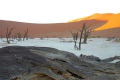 Döda Vlei i den Namib öknen Arkivfoto