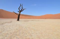 Döda Vlei i den Namib öknen, Namibia Arkivbilder