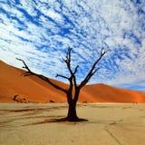 Döda Vlei i Namibia Royaltyfria Bilder