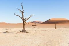 Döda Vlei nära Sesriem i Namibia Arkivbild