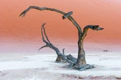 Döda Vlei nära Sesriem i Namibia Royaltyfri Fotografi