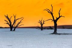 Döda Vlei, Namib öken, Sossusvlei på solnedgången Fotografering för Bildbyråer
