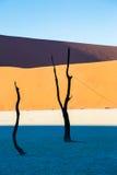 Döda Vlei, Namib öken, Sossusvlei på solnedgången Royaltyfria Bilder