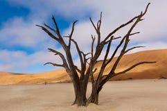 Döda Vlei, Namibia Royaltyfri Fotografi