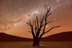 Döda Vlei, Namibia på skymning Arkivfoton