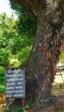 Dödande träd Arkivbild