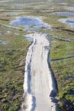 dödlägeswamp Royaltyfri Foto