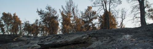 Dödnatur, skogsbrand, ekologifrågor arkivfoto