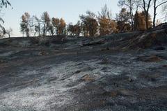 Dödnatur, skogsbrand, ekologifrågor royaltyfria foton
