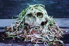 Dödskallemänniska med stor snigelkrypande på framsida- och rötabönaspro arkivfoto