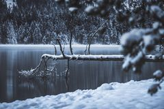 Dödträd i sjön royaltyfri fotografi