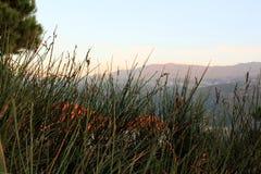 Dölja i buskarna i Libanon Mtein Arkivbild