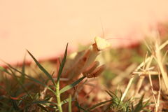 Dölja i gräsplanen Royaltyfri Bild