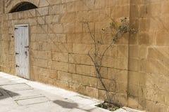 Dörröppning och buske i Mdina Malta arkivfoton