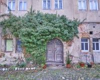 Dörr- och murgrönaväxt i Altenburg, Tyskland Royaltyfri Bild