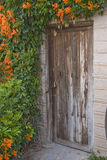 dörren blommar gammal whit royaltyfri foto