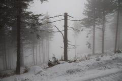 Dött brutet träd med kala filialer i vintern Fotografering för Bildbyråer