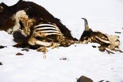 dött djur Arkivbilder