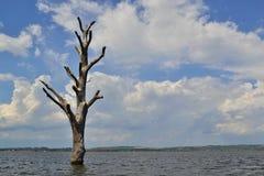 Dött enkelt träd i mitt av sjön Arkivbilder
