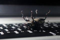Dött fel på bärbar datortangentbordet Royaltyfri Foto