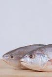 dött fiskhuvud för tät olyckskorp little upp yellow Arkivfoton
