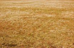 dött gräs Royaltyfri Bild
