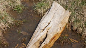 dött trä 2 Royaltyfri Fotografi