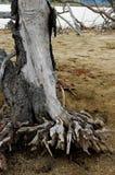 dött trä royaltyfria bilder