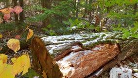 Dött trä i skogen arkivfoton
