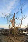 Dött träd Arkivfoto