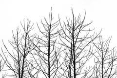 Dött träd Royaltyfria Foton