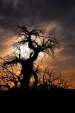 Dött träd Royaltyfri Bild