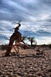 Dött träd Fotografering för Bildbyråer