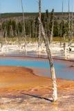 Dött träd framme av apelsinjordning och cyan kulört vatten Arkivbilder