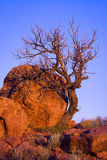 Dött träd i Abiquiu Royaltyfri Bild
