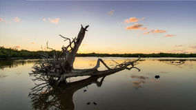 Dött träd i dammet Arkivfoton