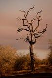 Dött träd i grusväg Royaltyfri Bild