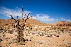 Dött träd i Richtersveld arkivfoto